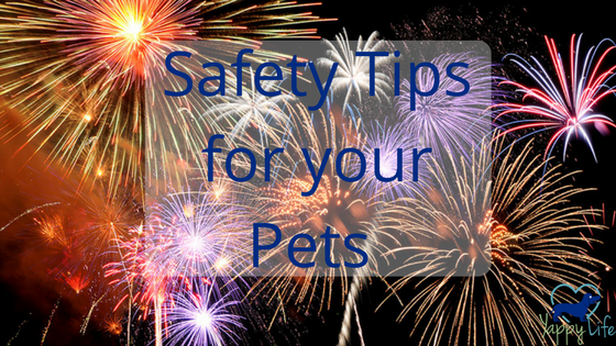 July 4th Safety Tips for Pets