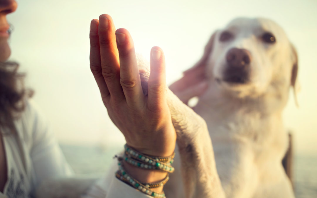 10 REASONS TO GIVE THANKS FOR YOUR DOG
