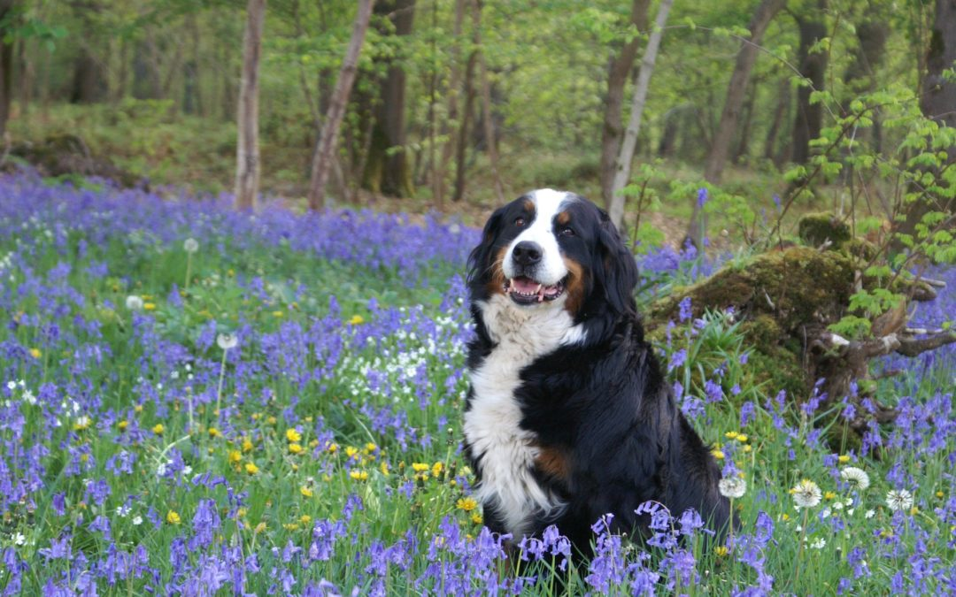 Tips to Prepare Your Dog for Spring